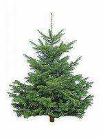 Живые новогодние елки